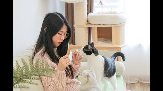 [Cat Live] Vlog: Daily life of my four cats and me