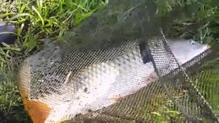 Рыбалка на озере кубовая брянской области