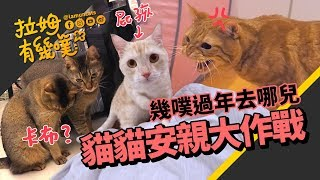 Cats going on a vacation |LAMUNCATS ♧