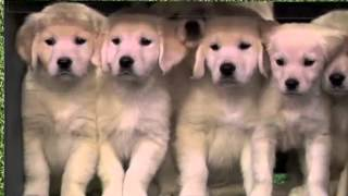Puppy Stage Fright (Puppy Predictors Rehearsal) (Late Night with Jimmy Fallon) thumbnail