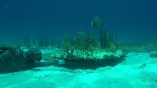 Spearfishing for Dinner - Bahamas Fishing and Freediving