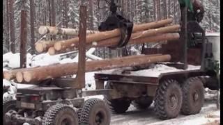 """Чёрный лес от 4 февраля, ГТРК """"Иркутск"""""""