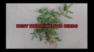 BEST MEDICINE FOR BIRDS - NO SIDE EFFECTS.