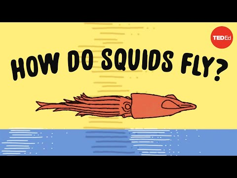 Did You Know That Squids Can Fly?