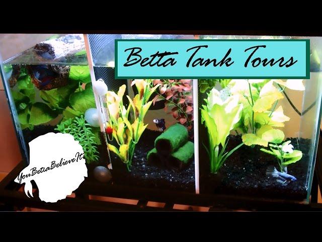 Betta Tank Tours  | You Betta Believe It
