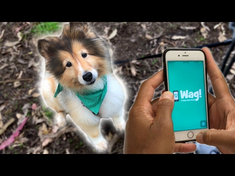 Can You Make Real Money On A Dog-Walking App? - YouTube