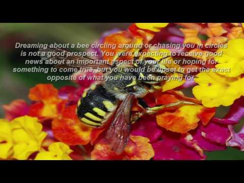 bees dreams meaning