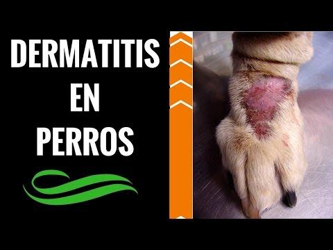 Il menù del bambino in 6 mesi a dermatite atopic