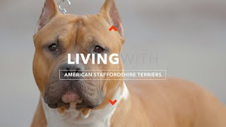 ALL ABOUT LIVING WITH AMERICAN STAFFORDSHIRE TERRIERS