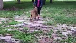 Dog Trainer Delray Beach, FL