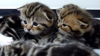 Cutest Cat Moments. Fluffy cutest kittens ever - angels