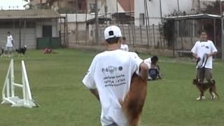 טיפול בעזרת כלבים - טיפול בעזרת בעלי חיים - תחרות אג'יליטי 4
