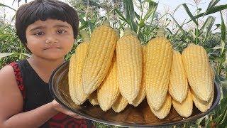 Sweet Corn Masala Recipe Harvesting Sweet Corn & Tasty Crispy Corn Cooking Farm Fresh Sweet Corn Fry
