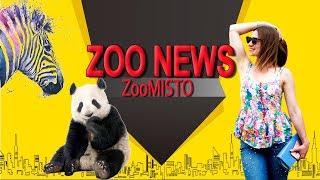 Собак обули в ботинки и ослы стали зебрами | Новости из мира животных #21 | ZooMisto