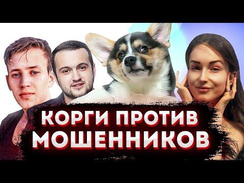 В суд на Эрика Гафарова, Масиса Овсепяна и Анастасию Иванюк | Рич угрожает девушке | Корги против