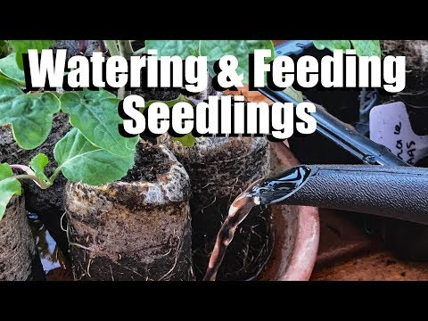 , title : 'Watering and Fertilizing Vegetable Seedlings - When and How / Spring Garden Series #2