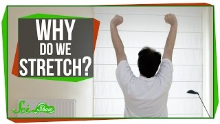 Why Do We Stretch in the Morning?