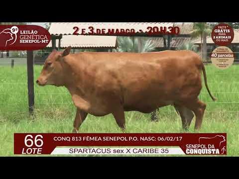 CONQ-813