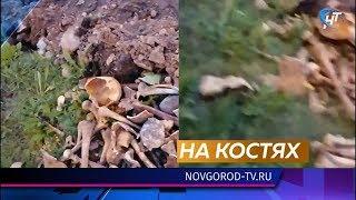 В центре Сольцов дорожники обнаружили человеческие кости