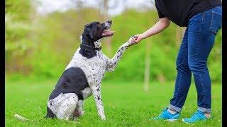How To Teach A Dog To Shake A Paw
