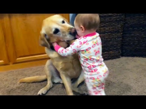Watch Toddlers Hilariously Play With Their Animal Friends!