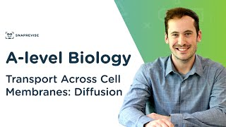 Transport Across Cell Membranes: Diffusion   A-level Biology   OCR, AQA, Edexcel
