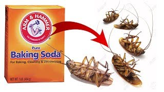 DIY Natural Cockroach Killer using Baking Soda
