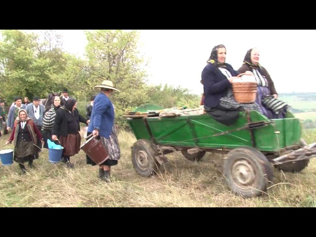 Reconstituirea culesului viei în satul Curciu - jud Sibiu