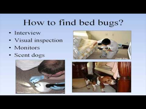 Bed Bug Training for Building Managers and Staff Video Screenshot