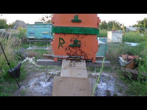 Пересадка пчелы в чистый улей на пасике