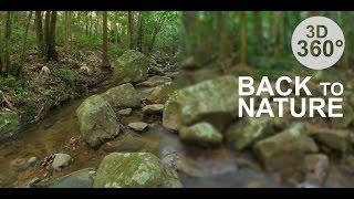 Back to Nature 2 - Rainforest (Stereoscopic 360° VR Video)