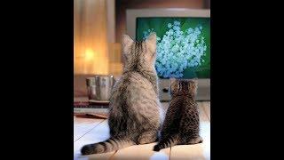 Приколы про кошку.Смотреть кино опасно.
