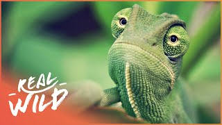 Nature Casts a Spell Affecting All Wildlife | Amazing Animals | Wild Things Documentary