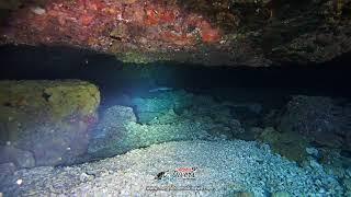 White Tip Shark - Aloha Divers Okinawa - Mergulho em Okinawa