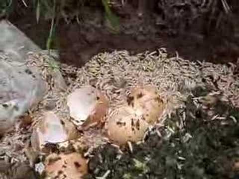 Les kystes des lamblias dans lexcrément chez lenfant le traitement komarovsky