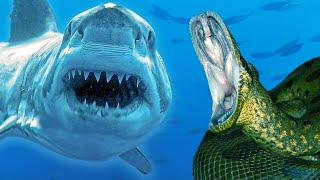 ANACONDA vs  GREAT WHITE SHARK!! | BRIAN BARCZYK