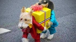 Lovely Pets 🐱🐶 Cute Cats And Dogs In Costumes (Full) [Epic Life]