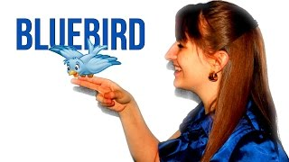 Bluebird - Juliana Schnee | Original Song