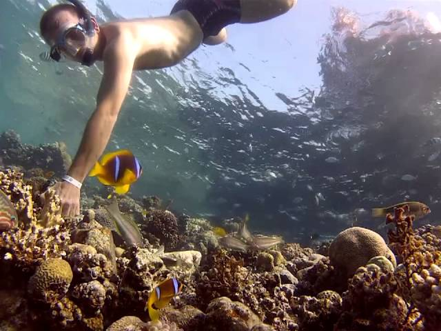 Dahab Tropitel House Reef snorkeling - December 2012 - GoPro Hero 2 HD