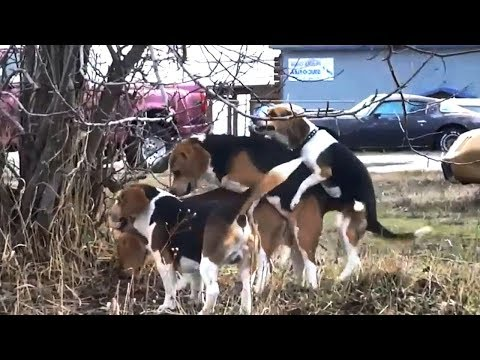 ♥ ♥ ♥ FUNNY BREEDING DOG VIDEO♥ ♥ ♥ AnimalS LovE ♥ ♥