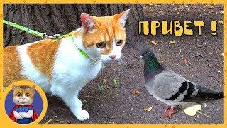 Рыжик гуляет по Москве. Тур по гостинице, пруд, парк и охота на голубей