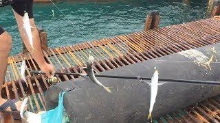 Рыбалка в абхазии и не только