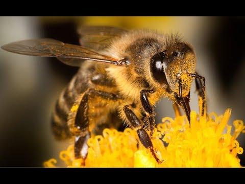 Вопросы и ответы по пчеловодству. Измайлов Геннадий Брониславович