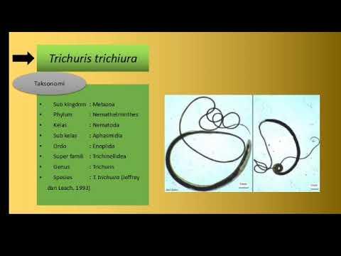 Vélemények a Trichomonasról