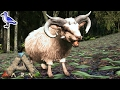 HOW TO TAME AN OVIS SHEEP IN ARK