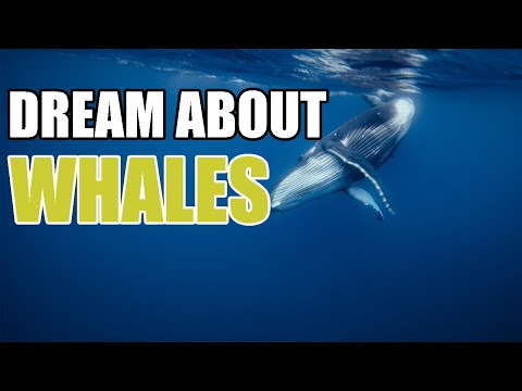 Dreams About Whales - What Whales Mean Culturally And In The Dream World - Sign Meaning