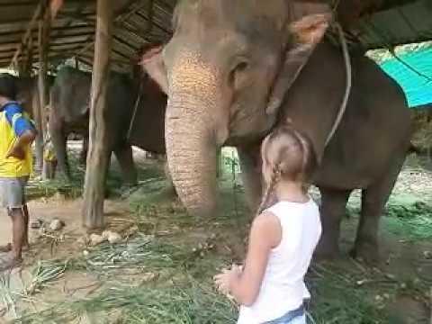 Кормим слонов/ Слоны в Таиланде/ Таиланд/ остров Ко Чанг