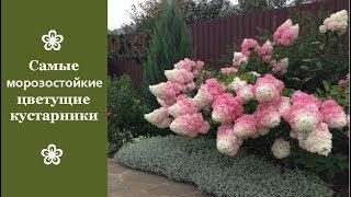 Самые морозостойкие цветущие кустарники видео