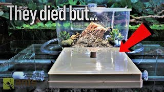 A Huge Mix-up | My Carpenter Ant Colony