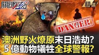 【關鍵時刻精選】澳洲野火燎原末日浩劫?5億動物犧牲全球警報?